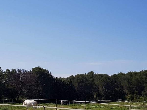 activites pour enfants Lambesc-ferme pedagogique Lambesc-balades a poney Bouches-du-Rhone-jeux exterieurs Lambesc-ecurie de proprietaires Salon-de-Provence-organisation d'anniversaires Mallemort-poney-club Lambesc
